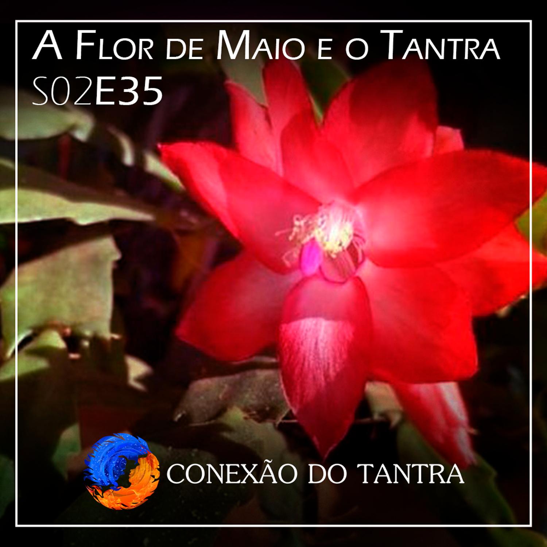 A flor de Maio e o Tantra